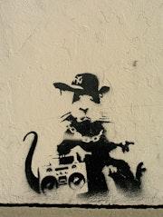 Cool Rat.