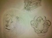 Félins chat, lion, tigre..