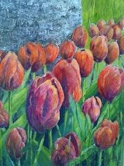 Tulipes rouges ou renouveau du printemps.