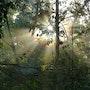 Soleil et brume…. Janeon Photos
