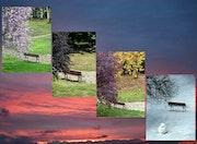 Le prunus et la quiétude du banc en quatre saisons.