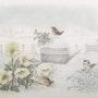 Les roses de noël sous la neige. Douceur Pastelle