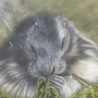 Marmotte. Michel. Gouyet