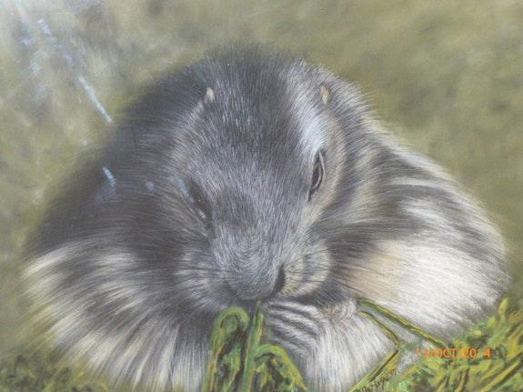 Marmotte. Gouyet Michel Michel. Gouyet