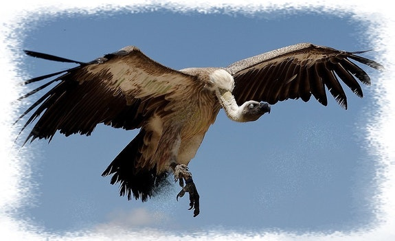 Quand le vautour…. Anne-Lucie Tarrie Altarrié