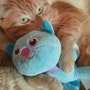 Mi gato Bruce. M. Pilar