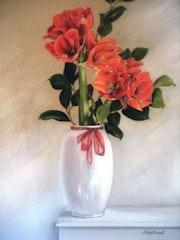 Amaryllis rouge.