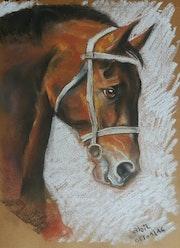 Arabic horse. El Mehdi Sabil
