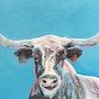 Blue longhorn. Régine Guthmann