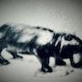 Hippopotame. Charles Favard