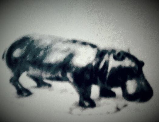 Hippopotame. Charles Favard Charles Favard