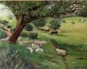 An English summer sheep grazing in a field.