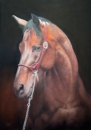 Warmblood horse portrait.