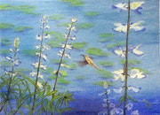 Humming Bird on Pond with Lupine.