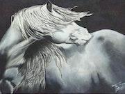 Equus. -.