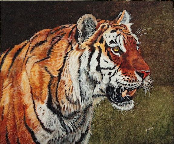 Tigre de Sibérie. Gache Gache