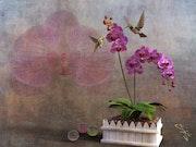 Orchidee mit Kolibri.