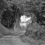 Le petit chemin noisette. Nicole Cellier