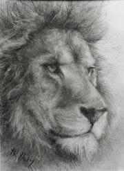 Tête de lion songeur.