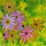 Bouquet 15. Gerard Flohic