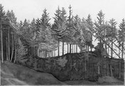 Untitled (17) Forest in Galloway, Scotland..