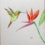 Colibri aux couleurs exotiques et oiseau de paradis, aquarelle originale 18x25cm. Eiji