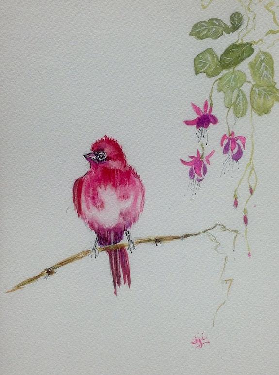 Passereau Roselin et les fuschias, aquarelle originale. Eiji Eiji