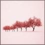 Les arbres roses. Marie Carteron