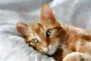 Chat roux. Marie Carteron