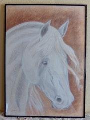 Cabeza de caballo blanco. Diego Gil