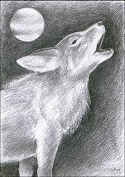 Coyote hurlant.