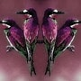 Acappella ! ! ! Le quatuor purple !. Doowmée