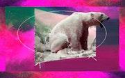 Le cri de l'ours polaire.