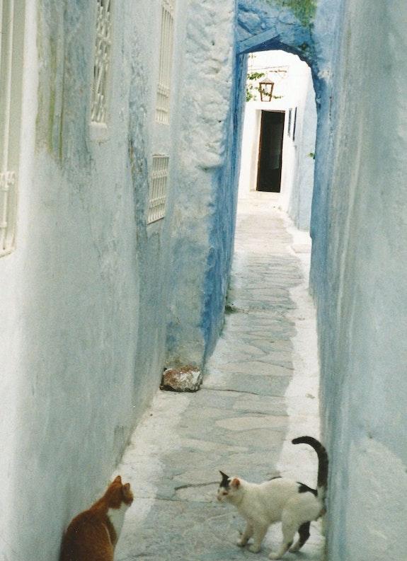 La ruelle aux chats Hammamet. Kinou Kinou