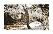 Près d'un Ruisseau…. Jean Char