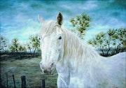 Le sauvage ou portrait d'un cheval de camargue.