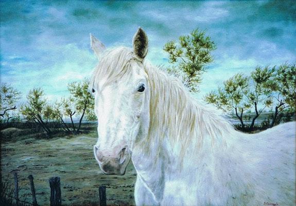 Le sauvage ou portrait d'un cheval de camargue. Enio Maccazzola Enio