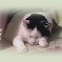 Le chat et ses mystères, un sujet inépuisable.. Youdit