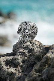Petit crâne. Jean Martin