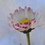 Hello me voilà pour honorer le printemps, sur les pelouses nous avons la vie… ?. Martine Dugue