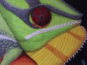 Cameleon. Chris-R Artiste Peintre Animalier