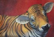 Vache tigrée.