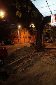 Escena nocturna con raíz.