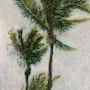 Palmiers dans le vent. Richard Nichanian