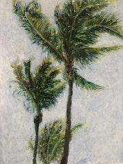 Palmiers dans le vent.