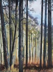 Pins en forêt de Moulière.