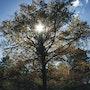 Caresse du soleil sur la cîme d'un arbre. Stéphane Huet