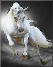 Le cheval blanc d'Henri IV. Marie Carteron