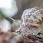 Snail tale. Tiff