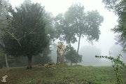 Aisne - Fantôme d'arbre dans la brume.